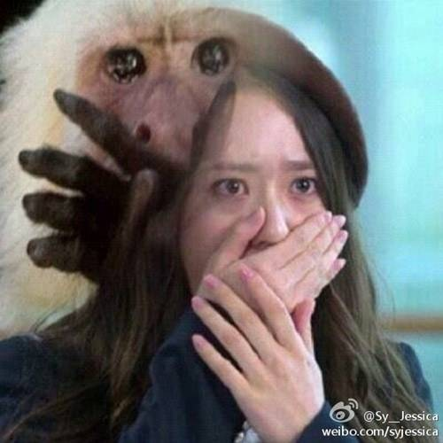 Jessica posts a humorous picture comparing Krystal to a cute monkey