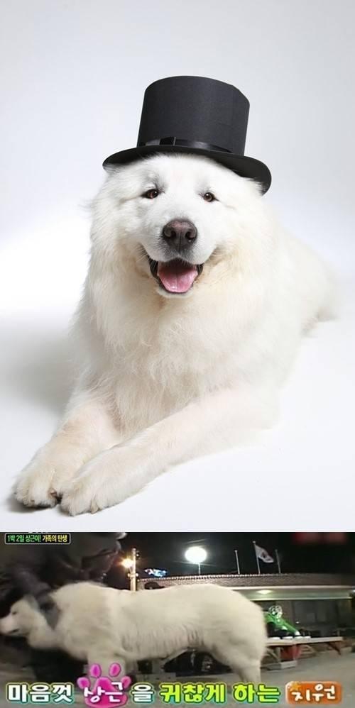Night Days Former Mascot Dog Sang Geun Passes Away Allkpopcom - Dog passes owner returns 2 years