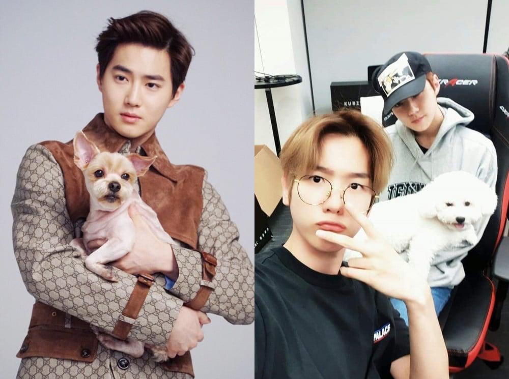 EXO as Pet Parents